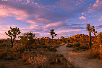 Joshua Tree Landscape shoot