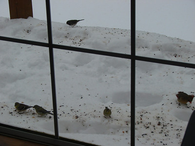 Letting the birds feasting off of the snow.