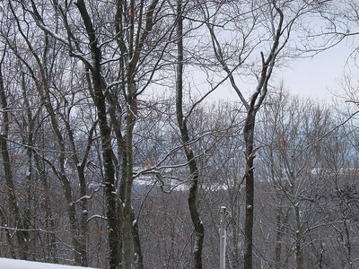 Snow covered fields faintly through the trees.