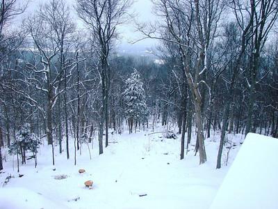 Looking down at our side yard (and satellite deer feeder)