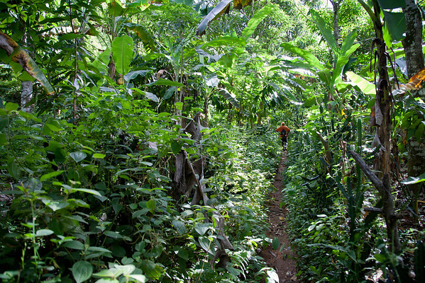 A jungle path in Milot, Haiti. Photos from Hopital Sacré Coeur, the CRUDEM foundation, and Holy Name Medical Center's involvement in Milot, Haiti.  Photo by Jeff Rhode / Holy Name Medical Center 10/21/13