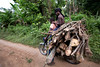 A motorcycle is used like a truck to haul wood to burn home from the jungle in Milot, Haiti. <br /> Photos from Hopital Sacré Coeur, the CRUDEM foundation, and Holy Name Medical Center's involvement in Milot, Haiti.  Photo by Jeff Rhode / Holy Name Medical Center 10/22/13