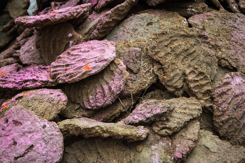 Even the cow pies (yes, formed by hand and used in many homes for fuel) shared in the Holi color party.