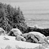 black and white winter snow scene, surf crashing on rocks, snow laden evergreen trees, Totman Cove, Phippsburg, Maine