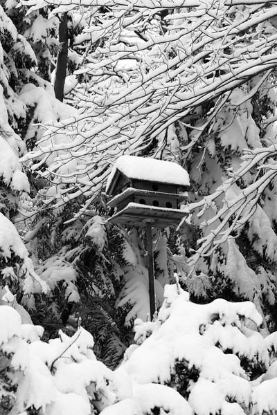Birdhouse in snow, black and white, after a blizzard, Phippsburg, Maine winter, colony bird house