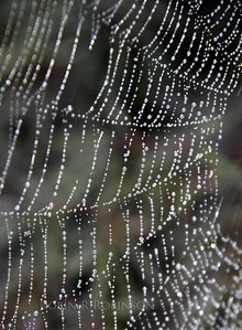 Web jewels, dew on spider's web