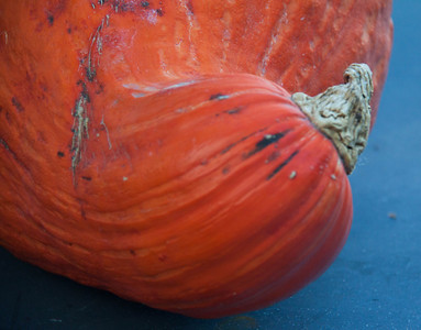 Golden Hubbard squash, stem end, right