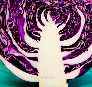 "Purple or red cabbage when cut vertically leaves this ""Tree Of Life"" design behind"