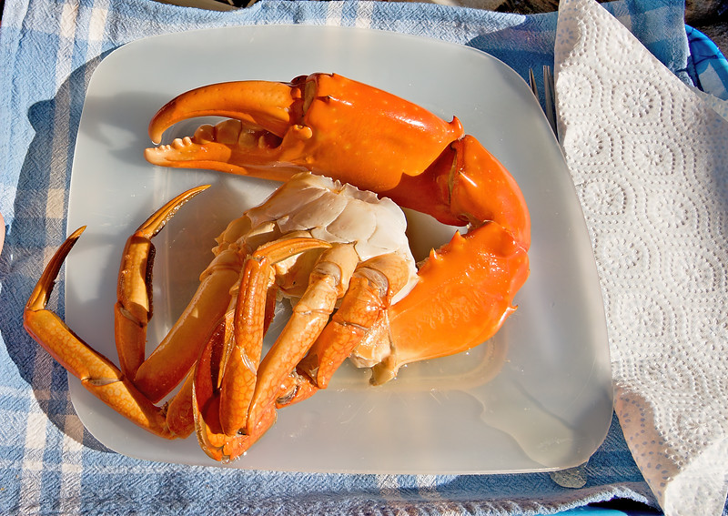 Giant Mud Crab. Cooked seafood nipper on a plate.