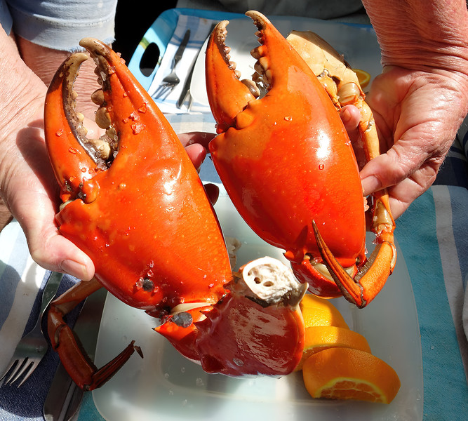Giant Mud Crab nippers. Cooked seafood platter.