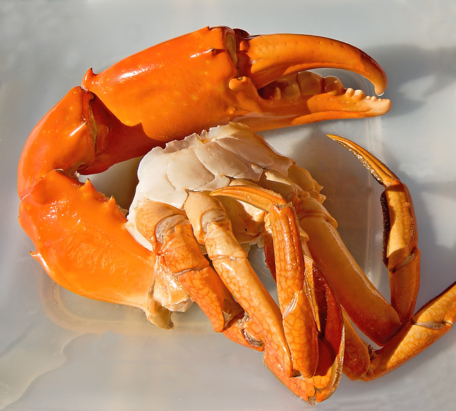Giant Mud Crab nipper closeup Cleaned then Cooked. Seafood dish.