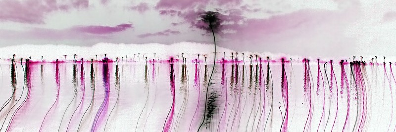 Pink Poles. Exclusive Original stock Surreal and Abstract  Photo Art digital download.