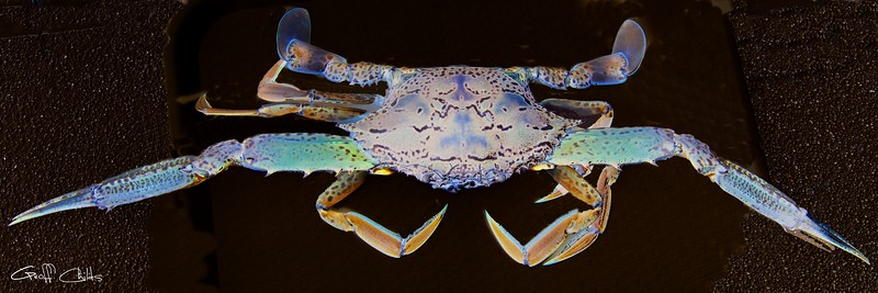 Surreal Crab. Exclusive Original stock Surreal and Abstract  Photo Art digital download.