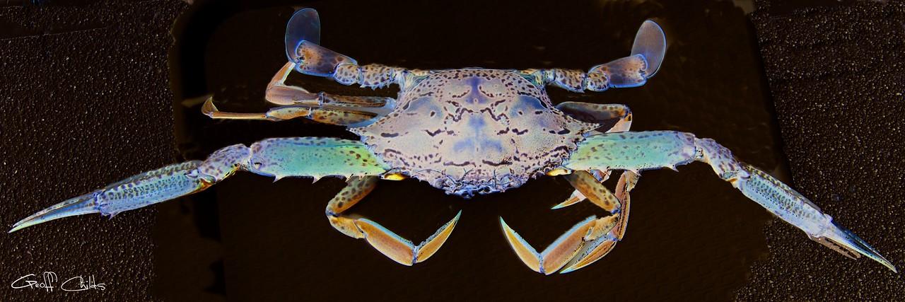 Surreal Crab. Exclusive Original stock Surreal and Abstract  Photo Art digital download.