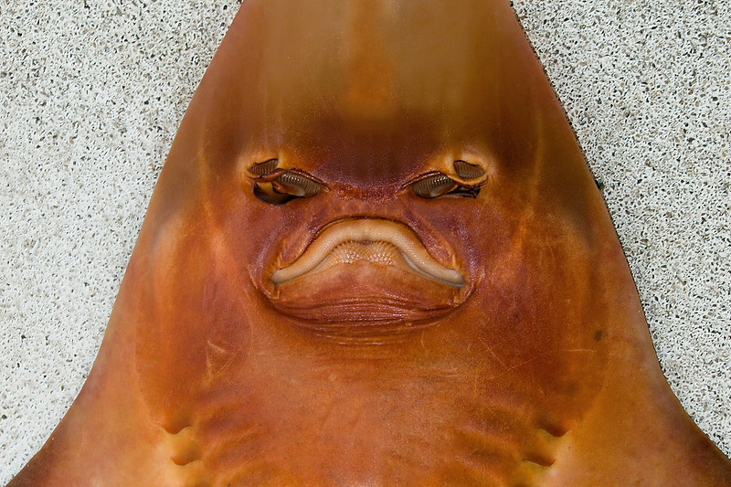 Monster from the deep. Unusual closeup head shot.