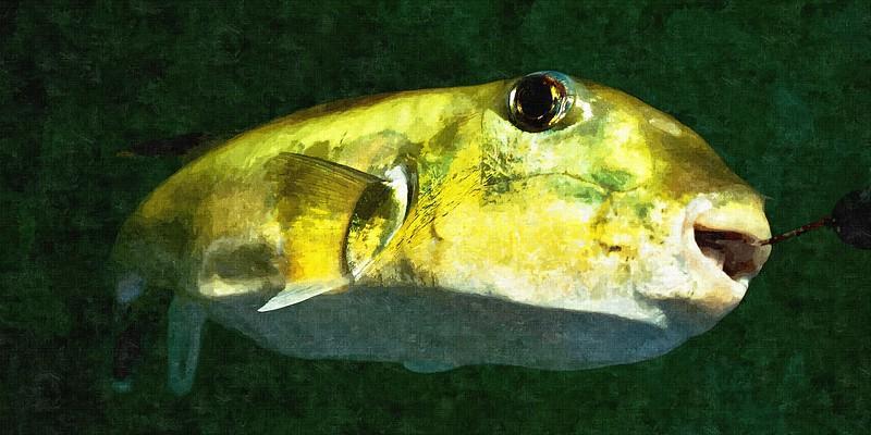 Green Toad Fish. Colourful abstract wall art image.