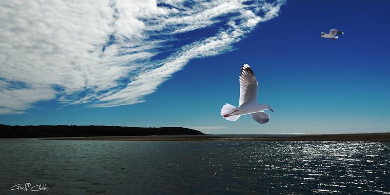 Sea Birds - Marinescape.  Art photo digital download and wallpaper screensaver. DIY Print.