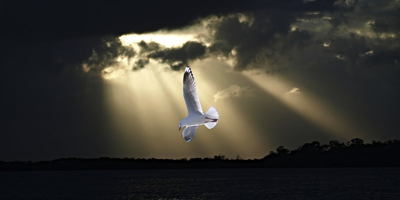 Seagull and Sunbeams in Ocean Sunset.