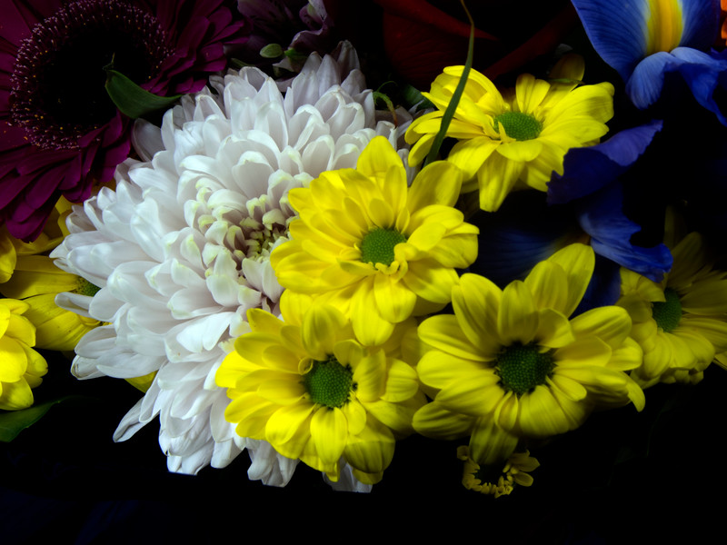 Beautiful bunch of mixed isolated flower blooms.