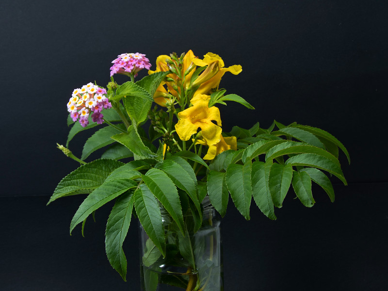 Pink Lantana and yellow Trumpet flowers with green leaves in a vase isolated on a black background.
