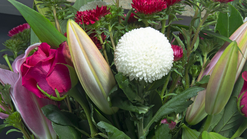 Pretty red Rose, Liliam Buds and white Pom Pom Mums Chrysanthemum flowers closeup.
