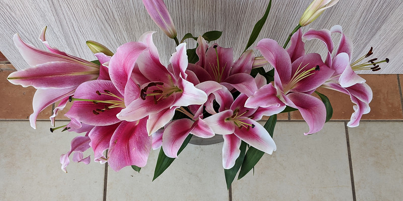 Floral display including Flashpoint pink and white Oriental Trumpet Lily overhead view.