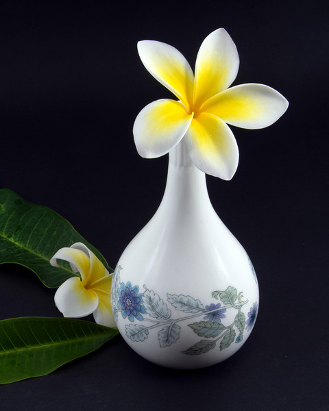 Colourful yellow and white Frangipani flowers, Apocynaceae, closeup in a white coloured decorative vase.