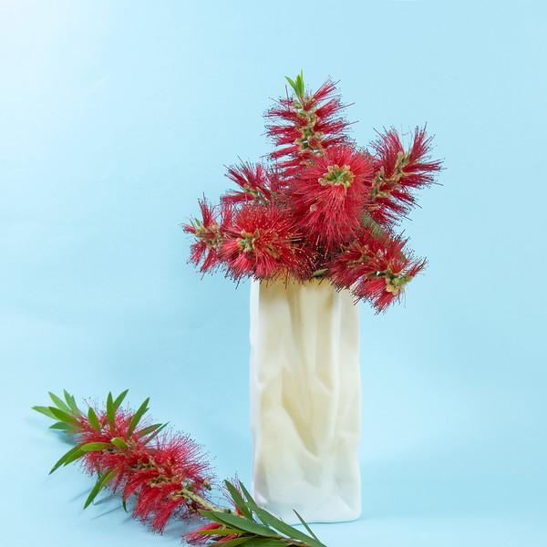 Red Bottlebrush flowers in a white vase.