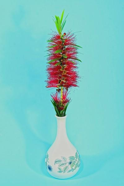 Single Red Bottlebrush flower in a decorative white vase.