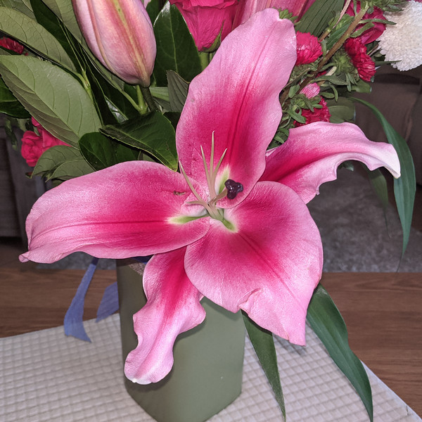 Flashpoint pink and white Oriental Trumpet Lily closeup.