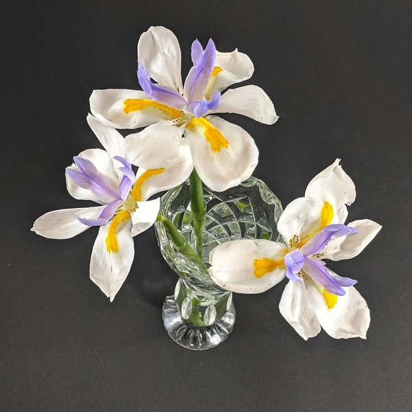 Three Wild Iris flowers cloeup in a crystal glass vase isolated on a black background.