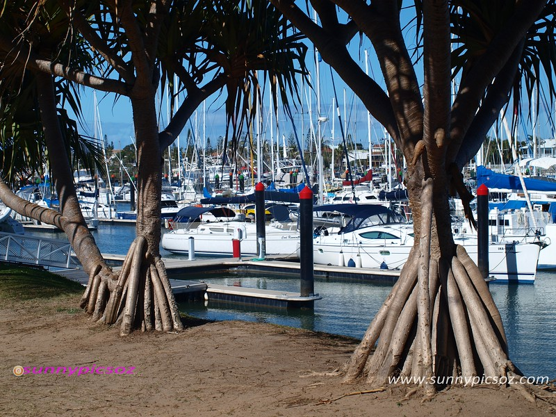 Tropical trees at a Mooloolaba Marina waterfront.