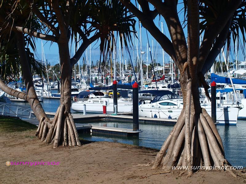 Tropical trees at a Mooloolaba Marina waterfront.
