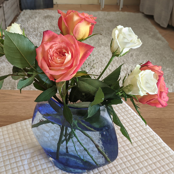 Pretty pink and white Roses in a translucent blue vase on a white matting. Indoors.  Australia.