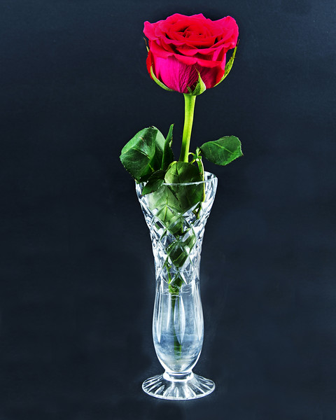 Red Rose flower with green leaves closeup in a cut glass vase isolated on a black background.