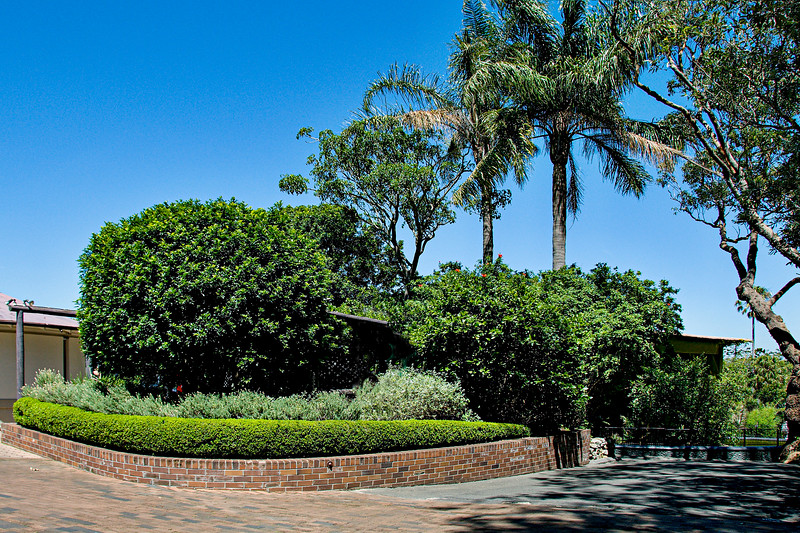 Green Palm trees, hedge, shrubs, and Pathway.