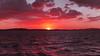 Crimson  Eye - Coastal Sunset.