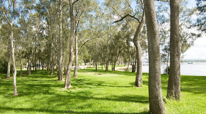 Waterfront parkland with Oak Trees