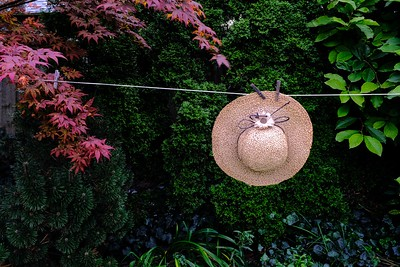 HAT ON CLOTHESLINE