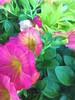 BloomsattheEdge-