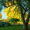 TreeShadePtd_JAC1589