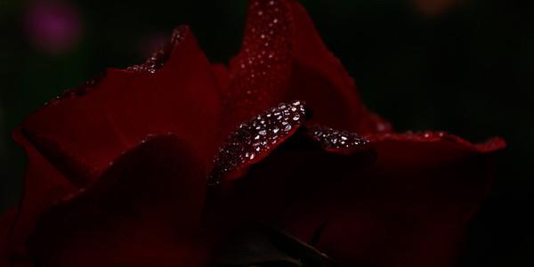 Madam Bessin's Fleurs