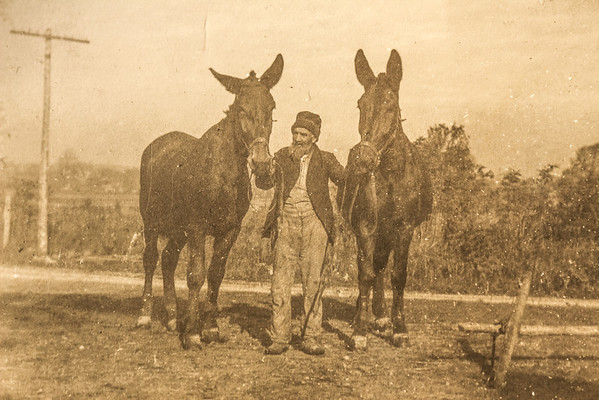 Henry Sapp & his donkeys, est early 1900's