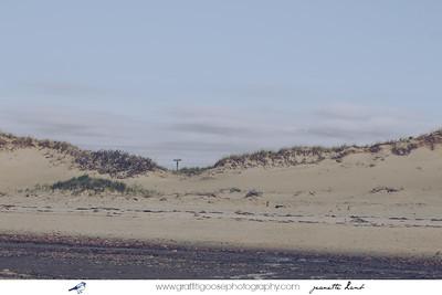 Cape Cod, 2014