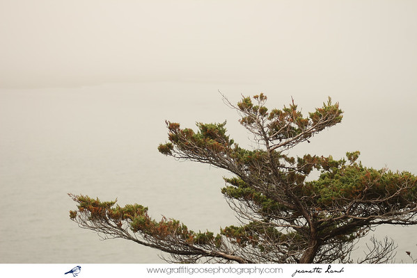 National Seashore, Cape Cod, M