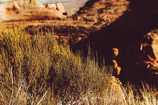 Colorado National Monument   2015   Jeanette Lamb   Graffiti Goose Photography