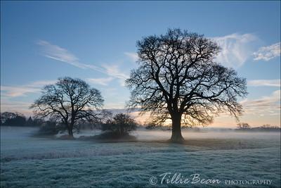 Frosty Morning - Hampshire