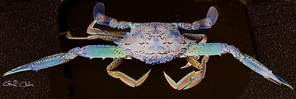 Surreal Crab...in Surreal gallery