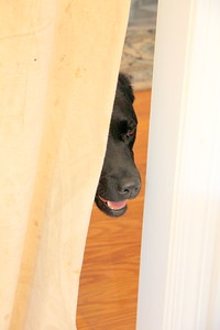 Dust cover at doorway -- Curious Hannah peeking