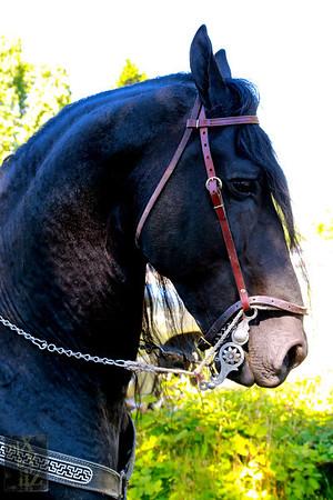 2013 KENT - DANCING HORSES